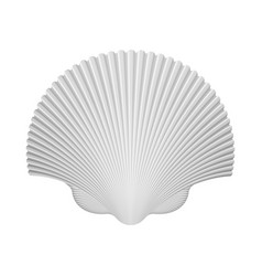Scallop Shell Isolated On White vector image