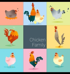 Set chicken family vector