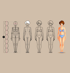 drawing lesson female body vector image