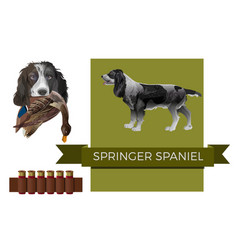 English springer spaniel vector