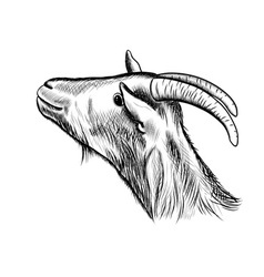 Goat sketch vector