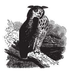 Owl vintage vector
