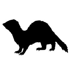 funny playful ferret vector image