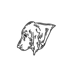 Hand drawn basset dog isolated vector