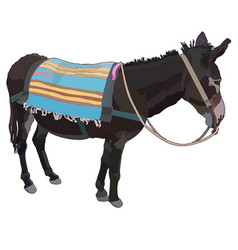 Realistic donkey with rug vector