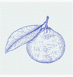 Mandarin orange with leaf blue hand drawn sketch vector