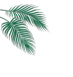 Two tropical palm leaves isolated on white vector