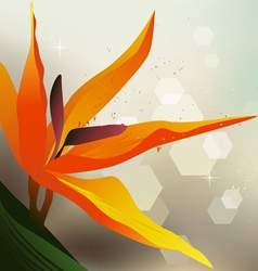 Floral background strelitzia - desktop wallpaper vector