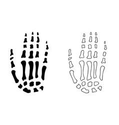 hand bones vector image vector image
