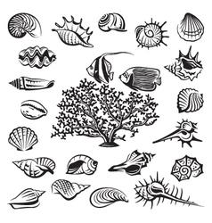 Seashells set vector