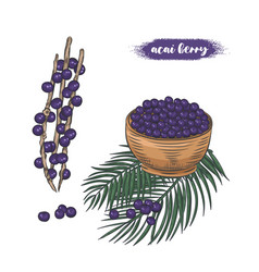 Acai berries on branch and in bowl vector