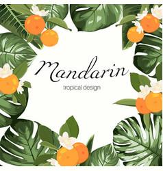 mandarine fruit monstera leaves frame vector image