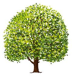 Tree Drawing vector image
