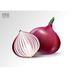fresh whole and half red onion bulbs on vector image