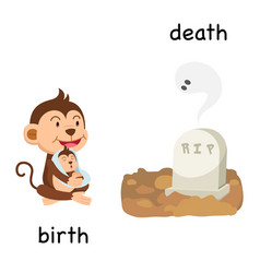 Opposite birth and death vector