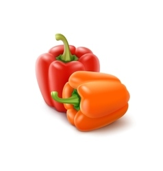 Orange Red Bulgarian Bell Peppers Paprika vector