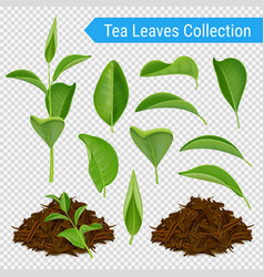 Realistic tea leaves transparent set vector