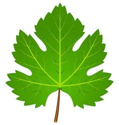 Green Wine Leaf vector image vector image