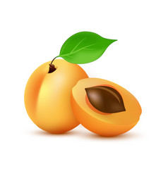 Apricot icon in realistic style - icon vector
