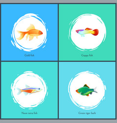 Gold fish and neon tetra set vector