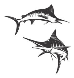 Marlin fish icons vector