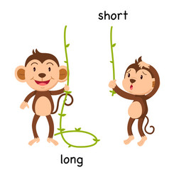 Opposite long and short vector