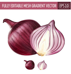 Red onion on white background vector