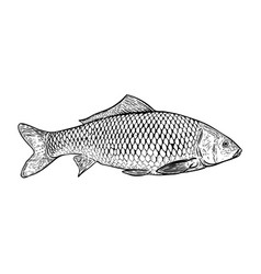 hand drawn carp fish design elements for poster vector image vector image