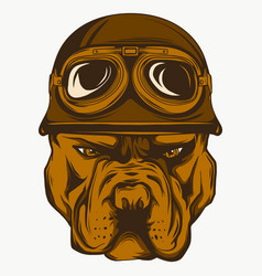 Angry pitbull mascot head on vector