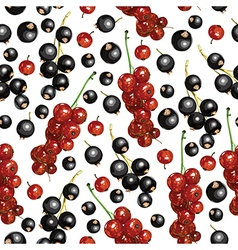 currant pattern vector image