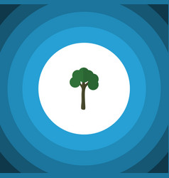 Isolated garden flat icon evergreen vector
