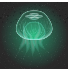 Jellyfish The underwater world vector