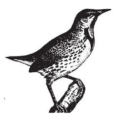 Meadowlark vintage vector