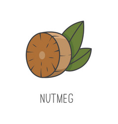Nutmeg line cooking isolated vector