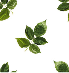 seamless pattern leaves flat template vector image