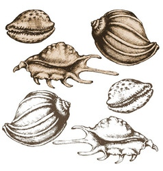 Shell sketch vector