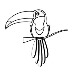 Toucan bird animal vector