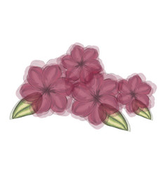 Watercolor silhouette of malva plant with flowers vector