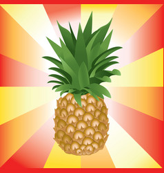 colorful of ripe pineapple vector image
