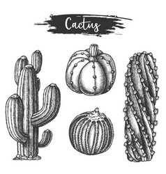 set isolated cactus or cacti sketch vector image