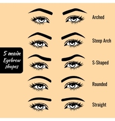Basic eyebrow shape types vector image