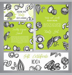 gift certificate with sketch nuts and seeds hand vector image