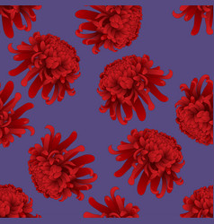 red chrysanthemum flower on purple background vector image