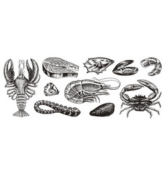 Crustaceans shrimp lobster or crayfish crab vector