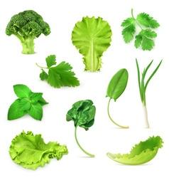 Green vegetables and herbs set organic vegetarian vector