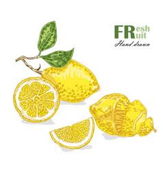 lemon isolated on white background fruit vector image