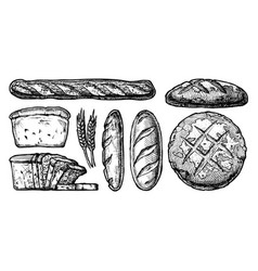 set of different breads vector image