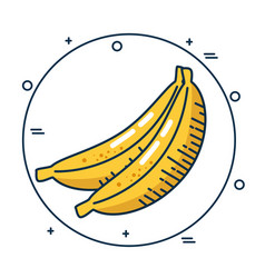 Banana fresh fruit handmade drawn vector