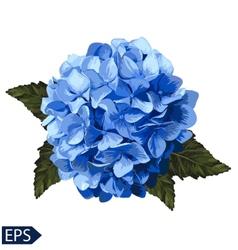 blue realistic hydrangea lavender vector image