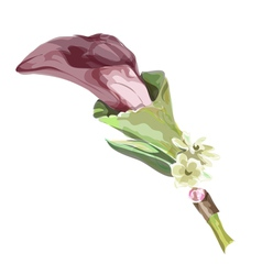 Calla burgundy color Imitation watercolor vector image